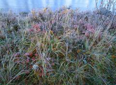 Fall Frost At The River's Edge, 1999