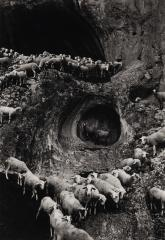 Sheep, Portugal, 1970