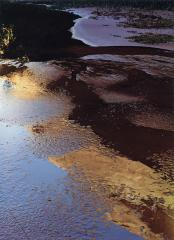 Reflections in Pool, Indian Creek, Escalante River, September 22, 1965
