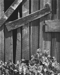 Boards and Thistles, San Francisco, California, 1932