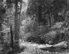 Tenaya Creek, Dogwood, Spring Rain, Yosemite Valley, California, 1948